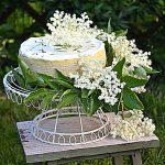 Sernik z koziego sera z kwiatami czarnego bzu. Jak pachnie czerwiec?